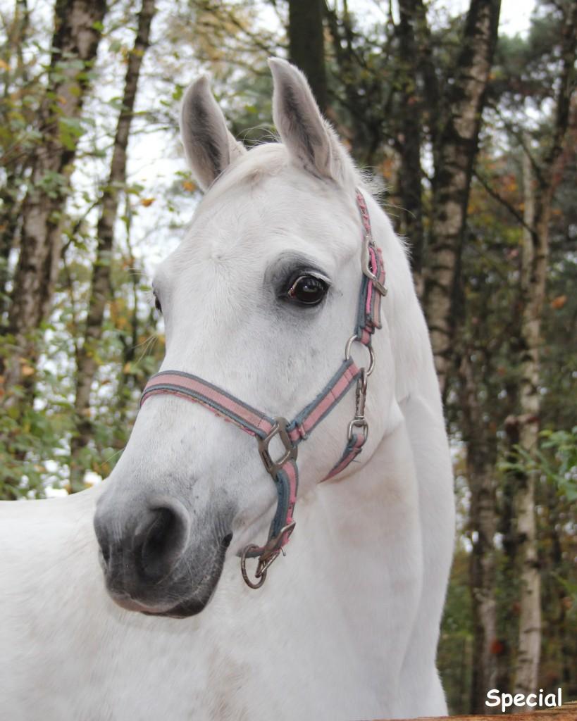 Pony S Snorrewind